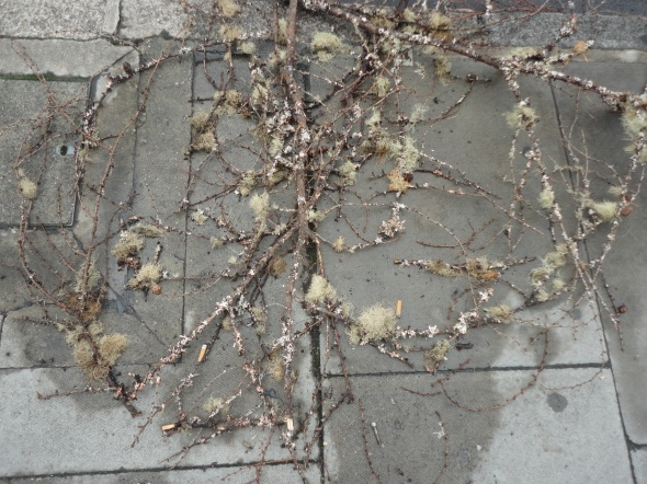 Leafy Branches, Lost Decoration
